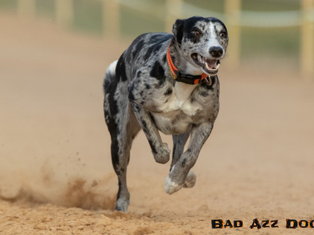 Sighthound Games - Photo Feature