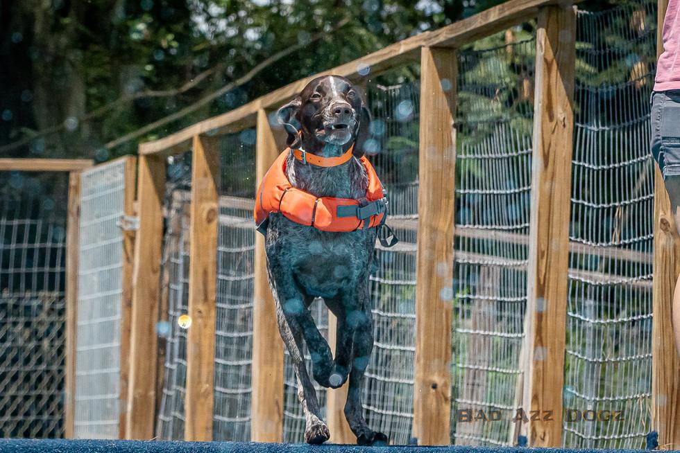 Dogwalker-Sep14-2019-367