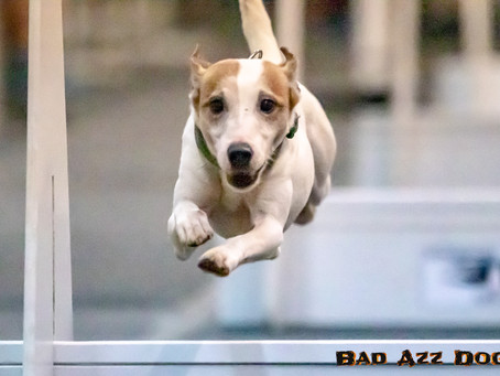 Flyball is Loud, Fast and Fun!