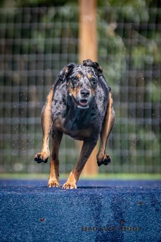 Dogwalker-Sep14-2019-174