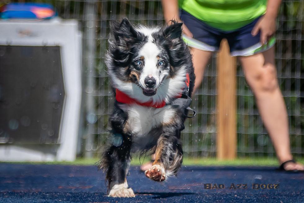 Dogwalker-Sep14-2019-161