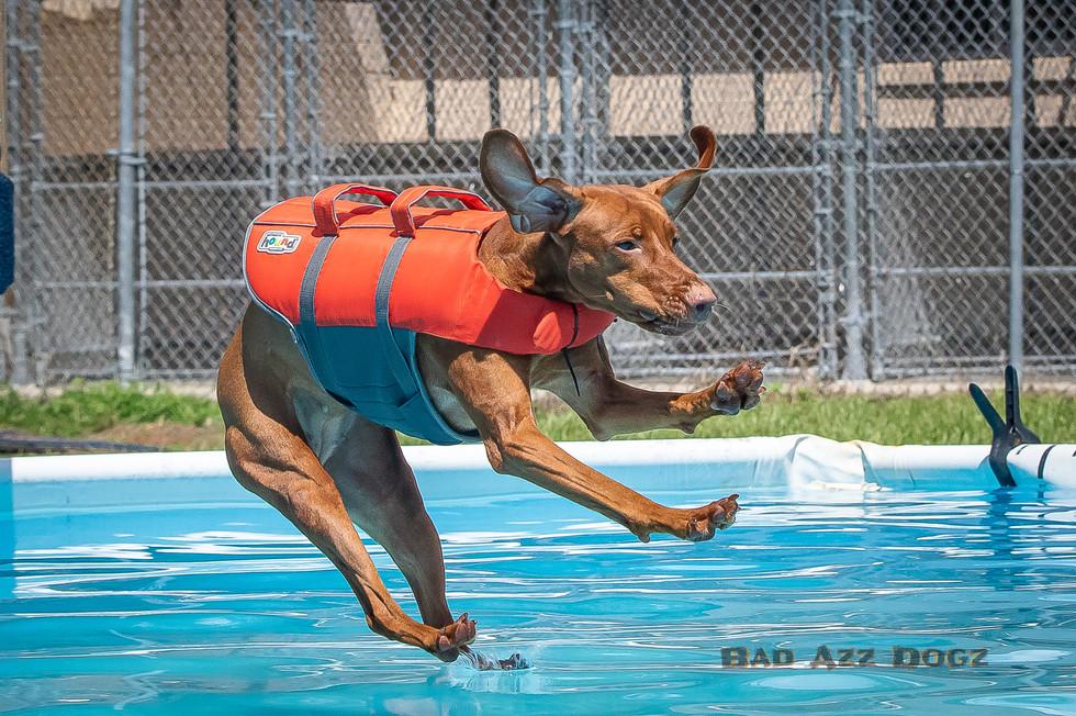 Dogwalker-Sep14-2019-289