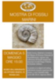 Mostra di fossili.jpg