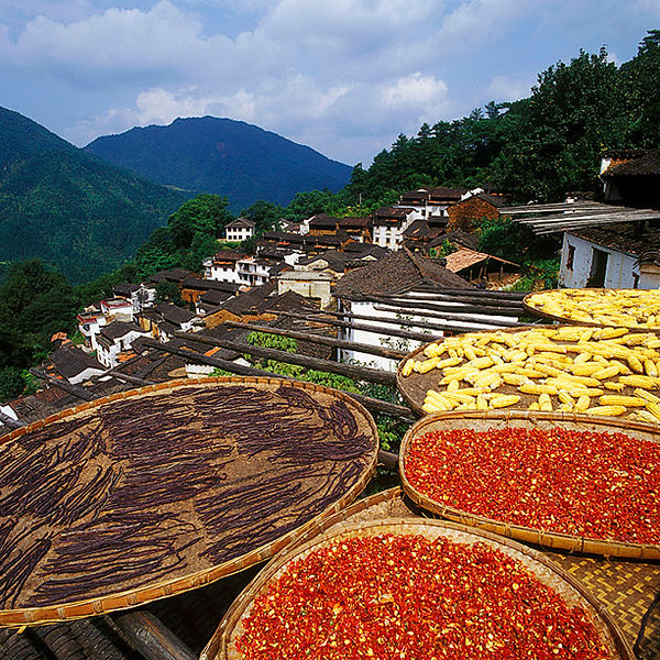 Air dying crops in a Huzhou village