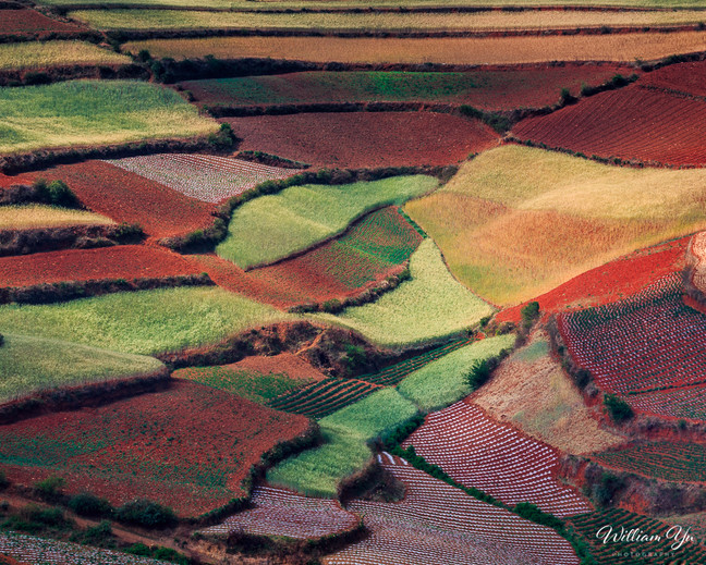 Colorful patches of cultivation