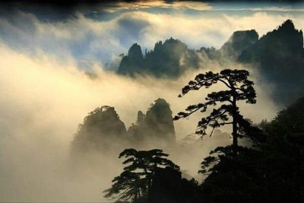 Mt.Huangshan and its pines