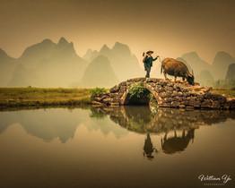 A peasant and his water buffalo