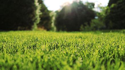 Lawn Care - Full Service Annual Programs