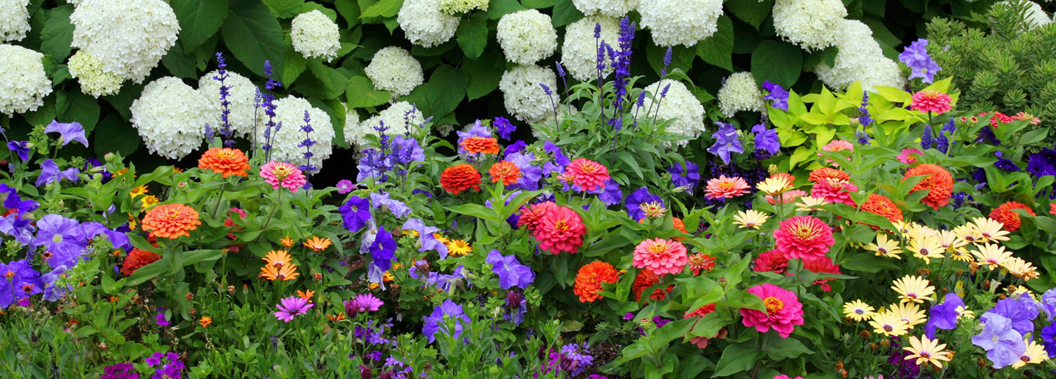 Gardens / Annual Flowers