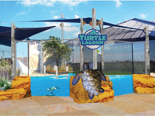 Living Coast Discovery Center Unveils Plans for Turtle Lagoon Enhancement Project