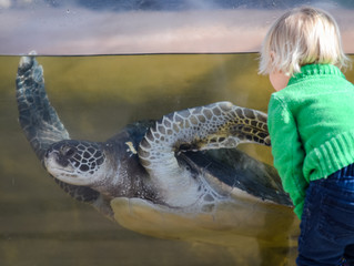 """Living Coast Discovery Center Celebrates Local Wildlife, Free Admission During """"Animals on the Bay D"""