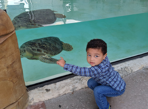 Living Coast Discovery Center Celebrates Animals on the Bay Day, Oct. 13