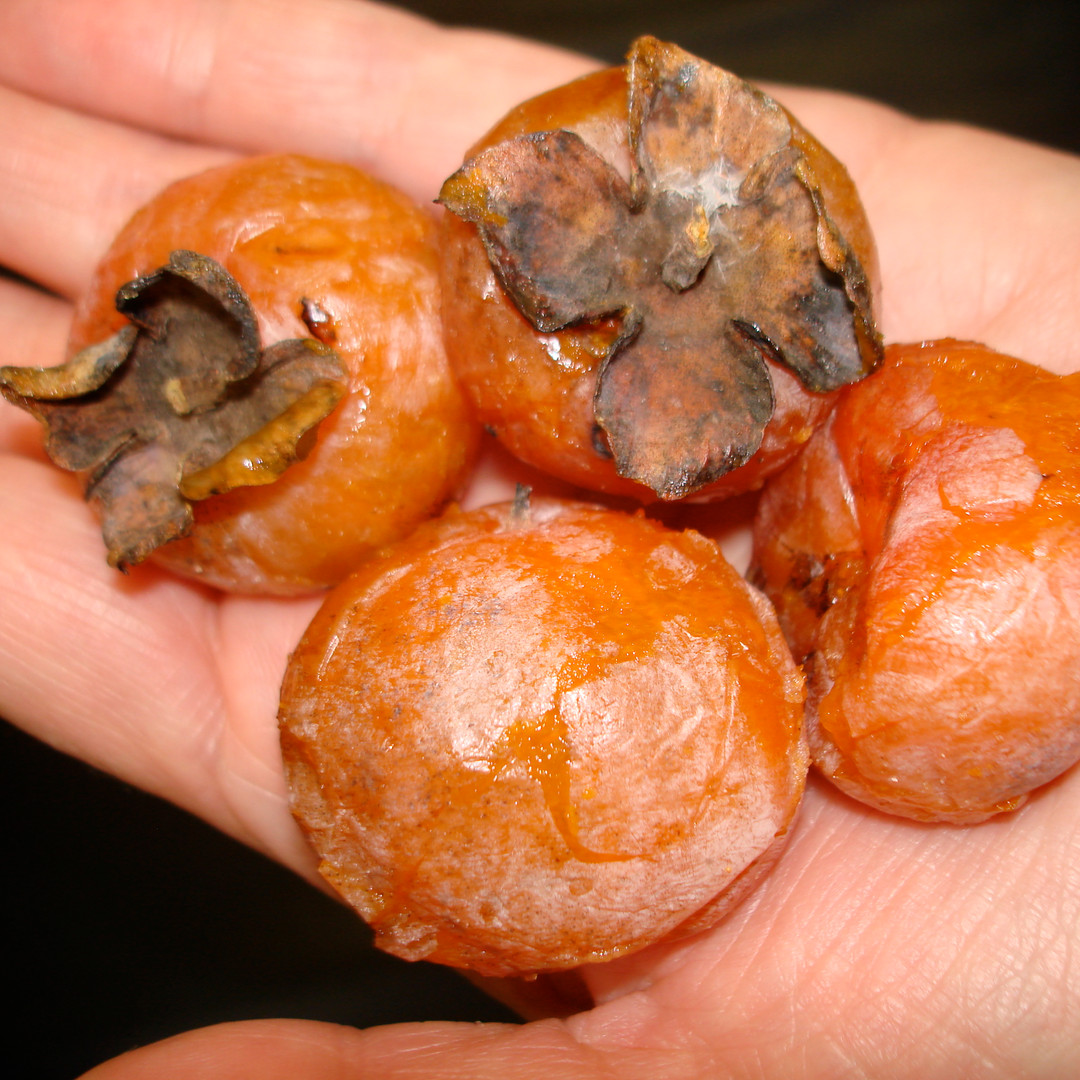 Copy of persimmon na9.jpg