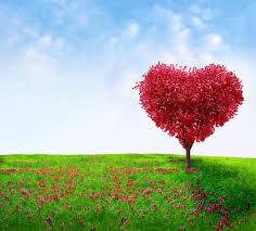 מה הקשר בין התאהבות לרזון?
