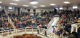 2019 Sale Photo credit to Brooke Schiess