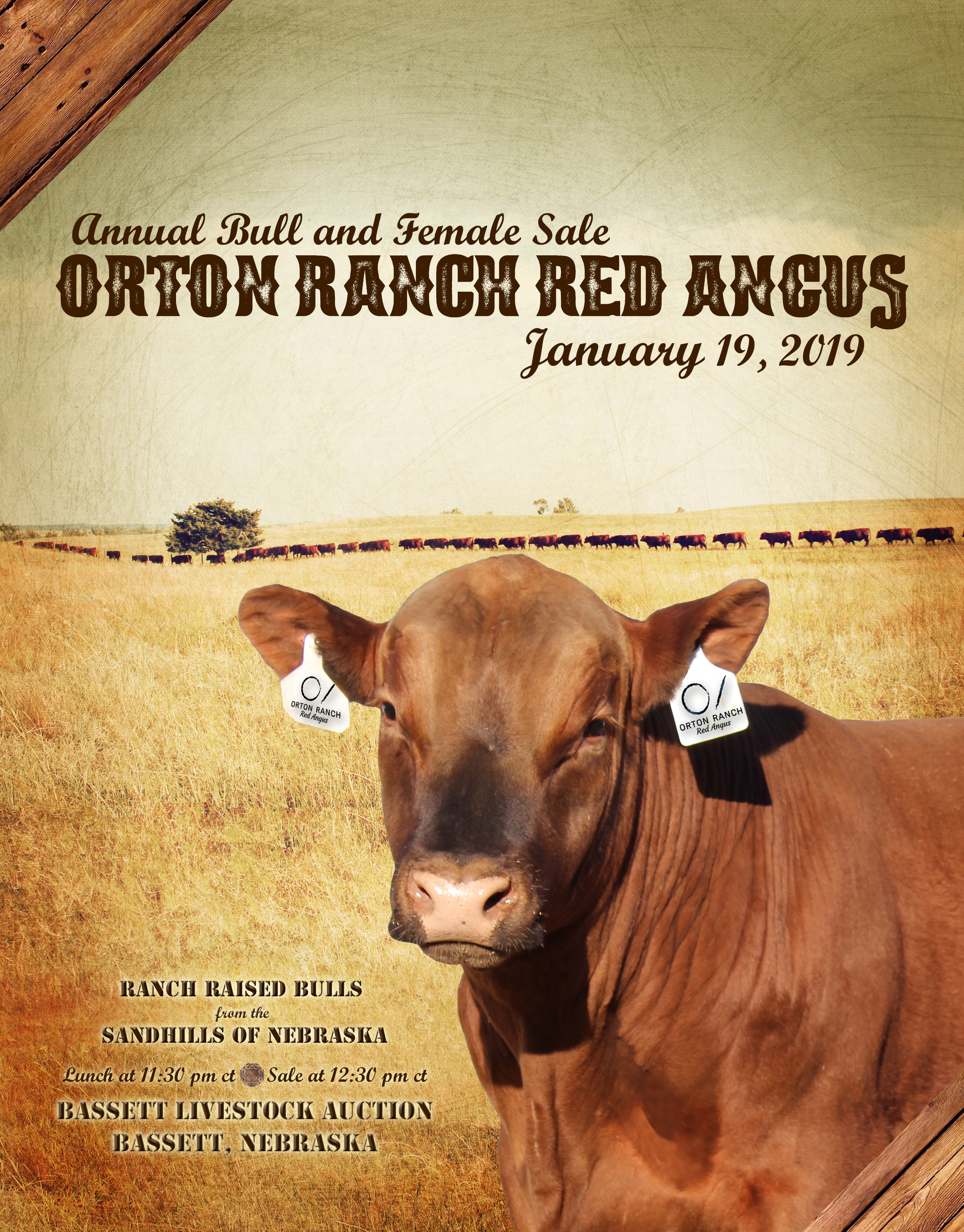 Orton Ranch Red Angus Catalog 2019