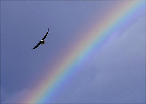 marnee eagle and rainbow.jpg
