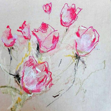 Tulipani rosa e bianchi