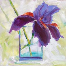 Iris (Study)