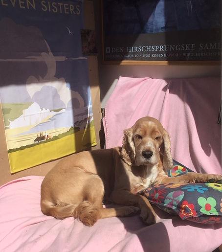 Alice  photo on chair 03.JPG