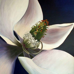 LynDonald-magnolia