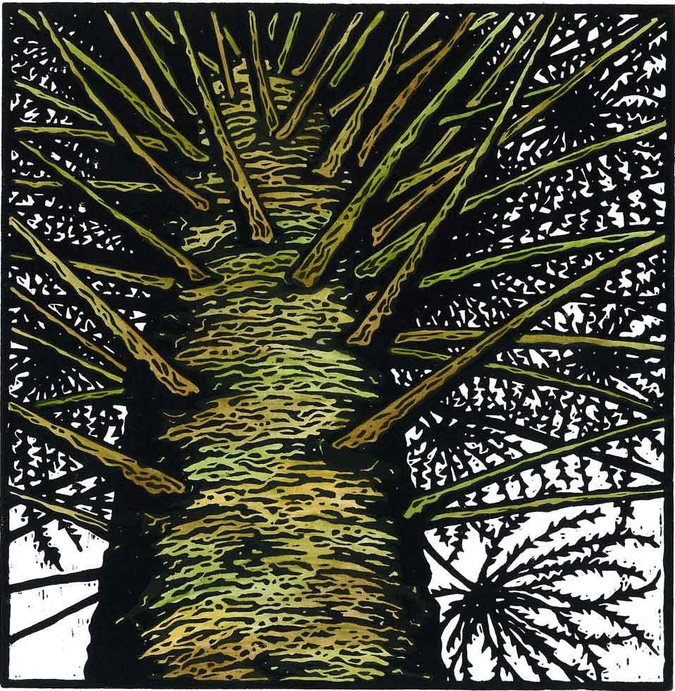julie-hanrahan-bunya-pine