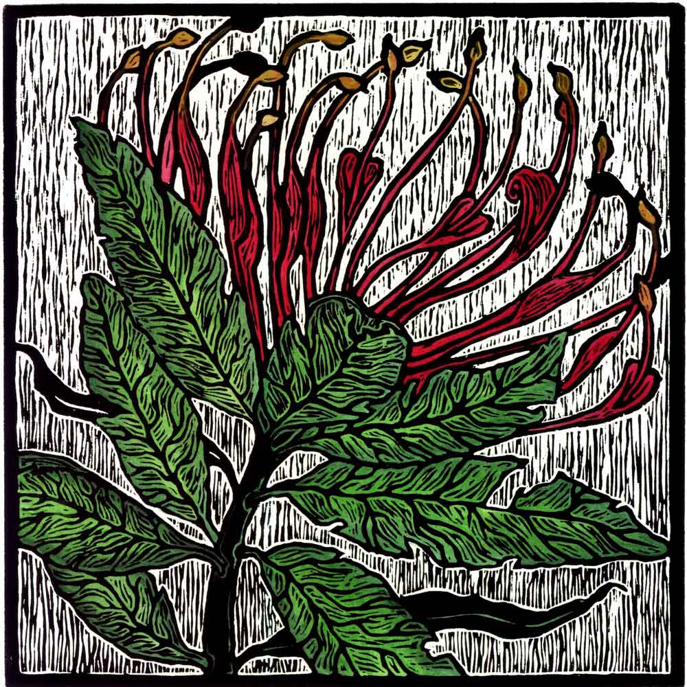 julie-hanrahan-tree-waratah