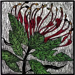 julie-hanrahan-tree-waratah