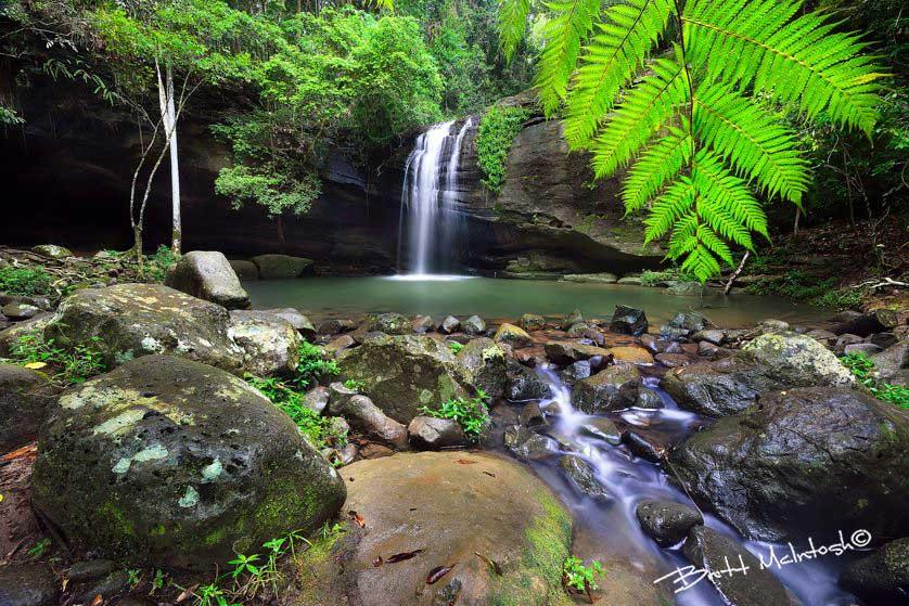 Brett-McIntosh---Buderim-Rainforest