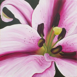 LynDonald-Oriental-Lilly