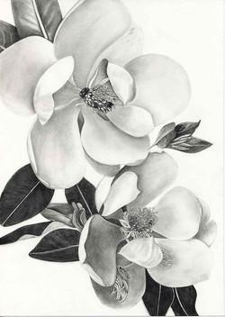 LynDonald-Magnolia-graphite