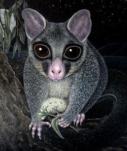 Possum No. 1