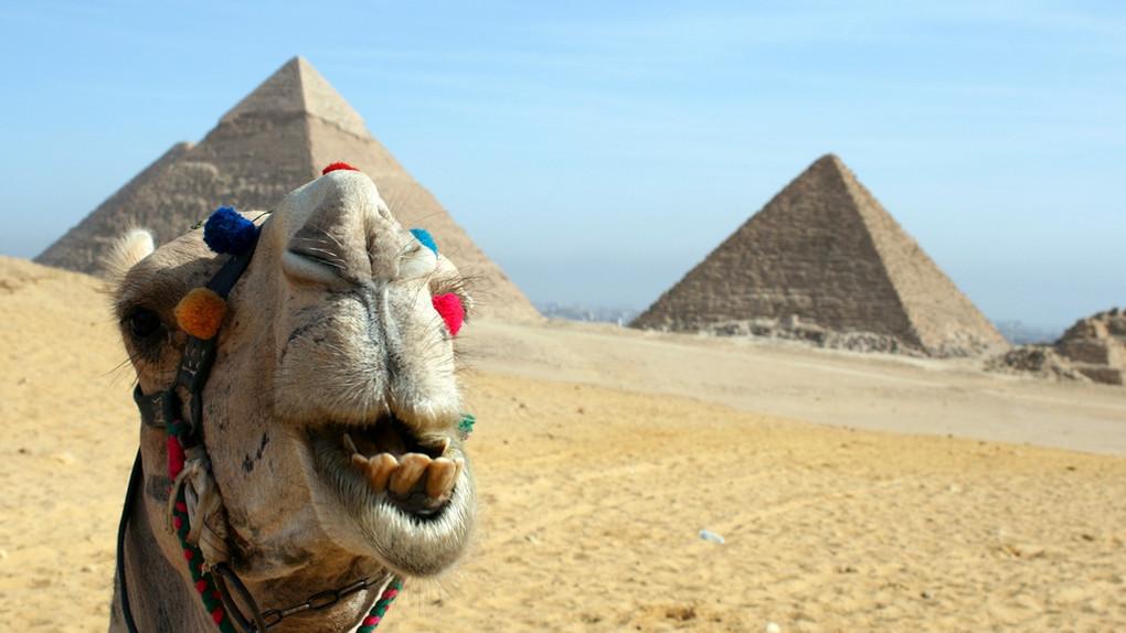 Дождались! Скоро мы рванем в Египет!