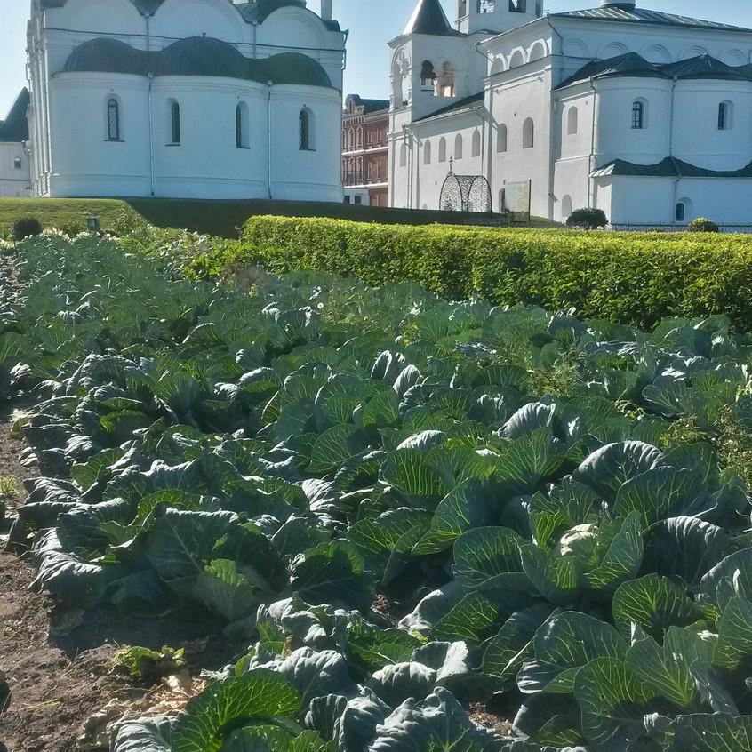 Во дворе не пусто - выросла капуста Спас