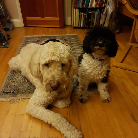 Dog Day Diaries 4:Togetherness