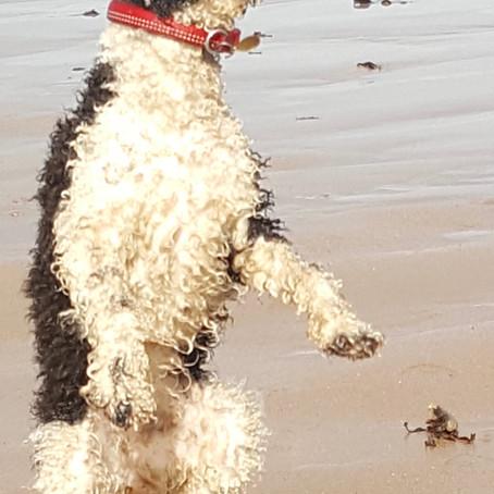Dog Day Diaries 3: Yip, It's me Bridie!  By Bridie