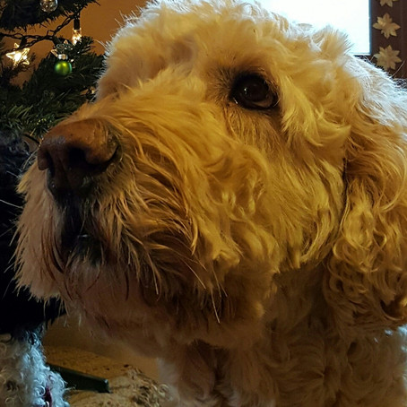 Dog Day Diaries 2:Well there's two of us, by Ted