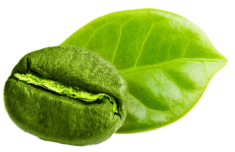green coffee bean, arabica, robusta, Vietnamese Coffee Culture