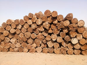 Brazil Teak Wood.jpeg