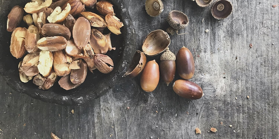 Fall Wild Plant Harvests - Gathering Seeds