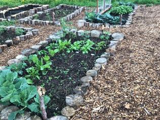 Grow A Spring Vegetable Garden