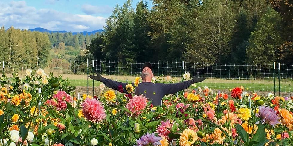 Grow Dahlias & Cut Flowers