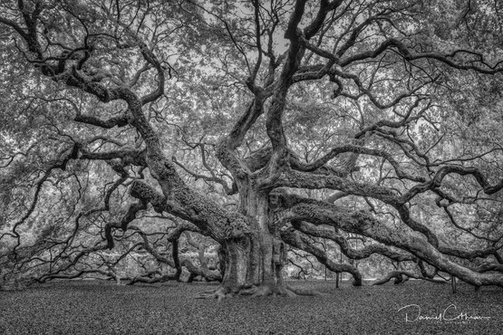 Low Country-2.jpg