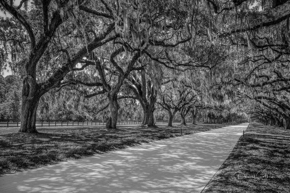 Low Country-10.jpg
