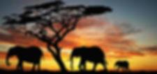 elephant-sunset-590.jpg