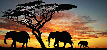 elephant-sunset-590.jpg