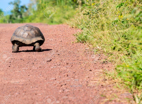 The Tortoise and the Hare - Wellness Edition