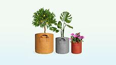 Veggie Pot homepage 4.png