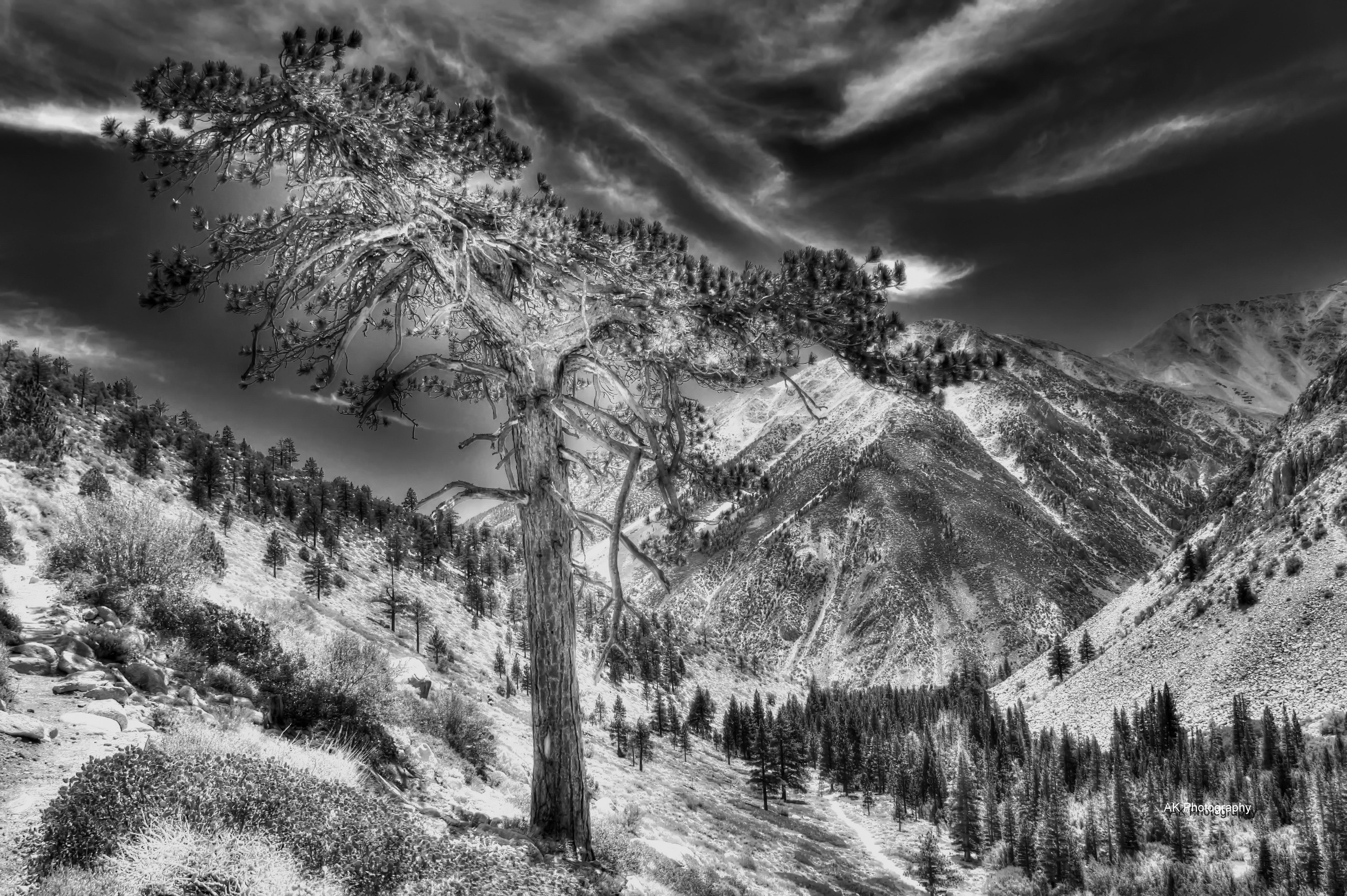 lonesome tree sw