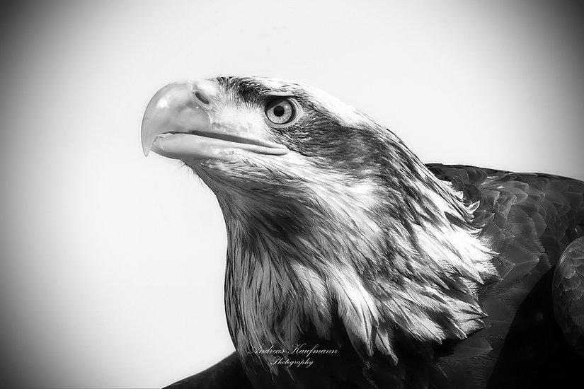 Eagle1sw1a.jpg